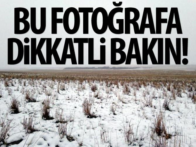 BU FOTOĞRAFA ÇOK DİKKATLİ BAKIN!