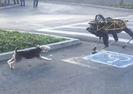 ROBOT KÖPEK, GERÇEĞİNE KARŞI...
