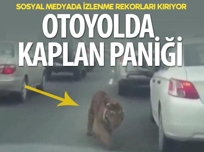 OTOYOLDA KAPLAN PANİĞİ!