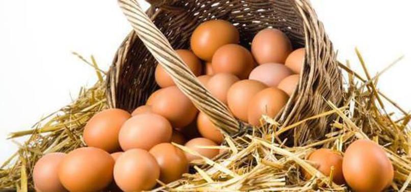 organik köy yumurtası ile ilgili görsel sonucu