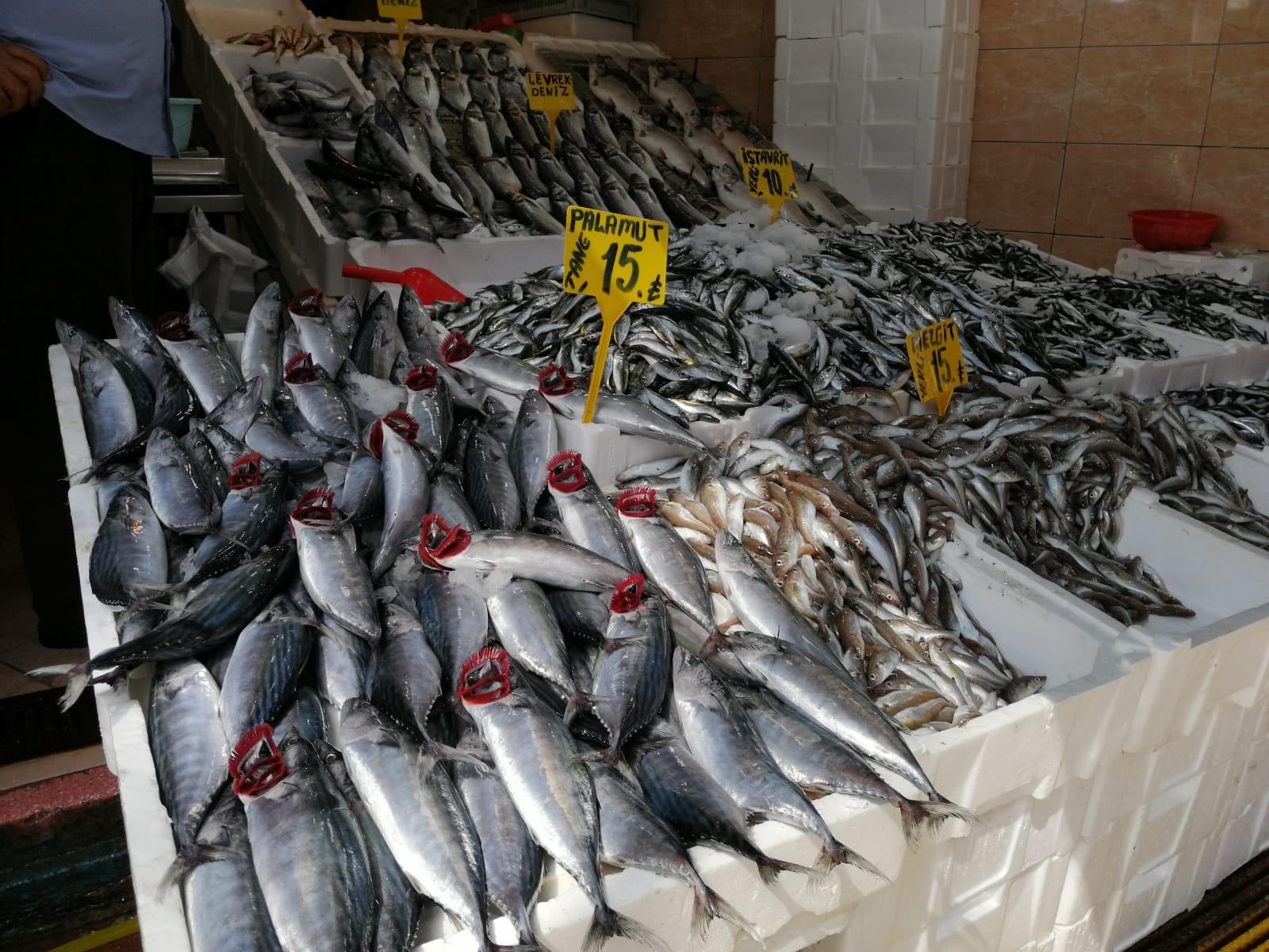 Balıkseverlere müjde! Yarım kiloluk palamut 15 lira