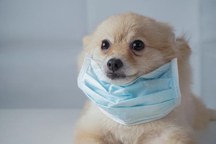 Evcil hayvanı olanlar dikkat! Vuhan'dan kritik koronavirüs uyarısı